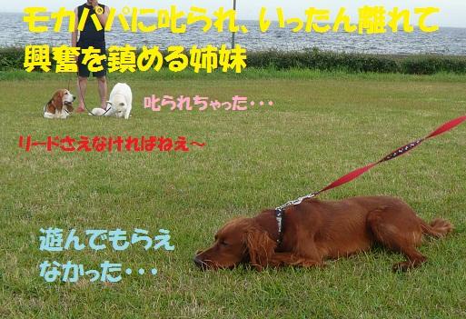 f0121712_16484997.jpg