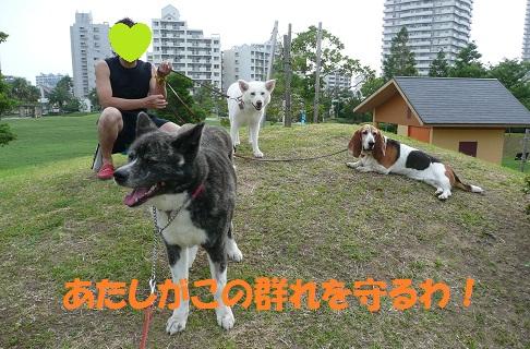 f0121712_16514170.jpg
