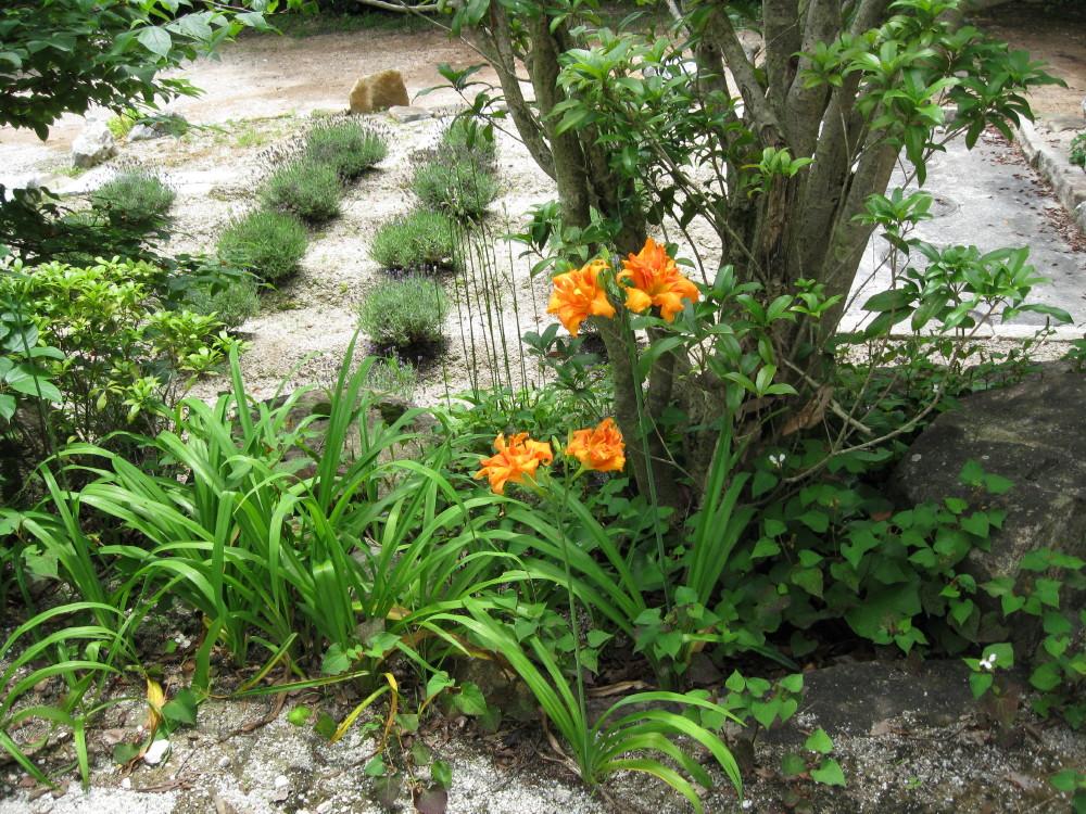 夏の花 ①_c0218213_22443472.jpg