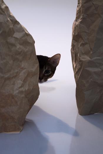 [猫的]隠れる_e0090124_6485142.jpg