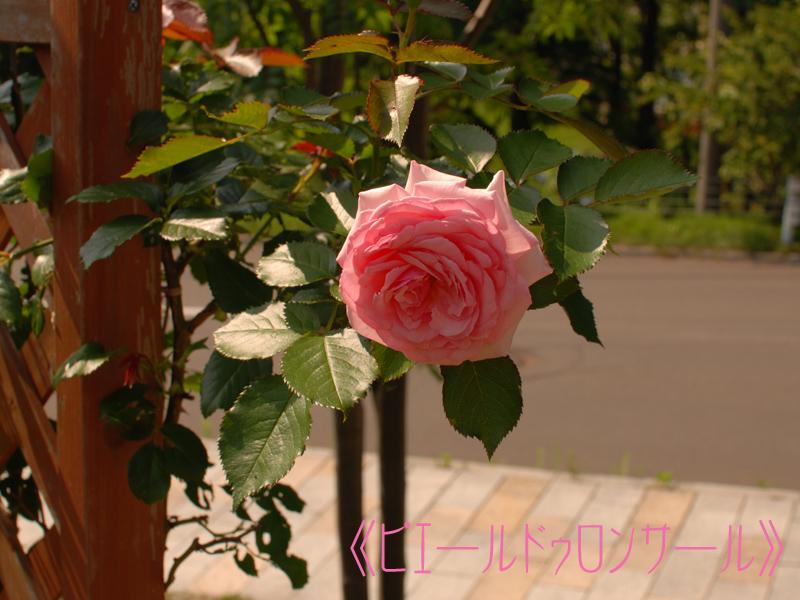 b0151831_16203563.jpg