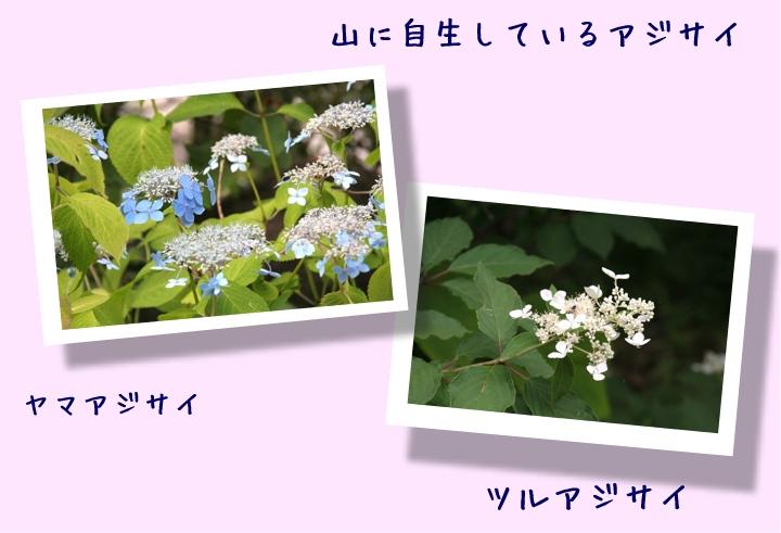 d0012134_0305876.jpg