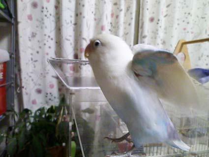 鳥脇_e0147757_23262757.jpg
