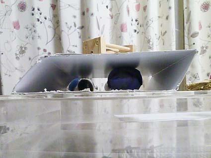 鳥脇_e0147757_23273142.jpg