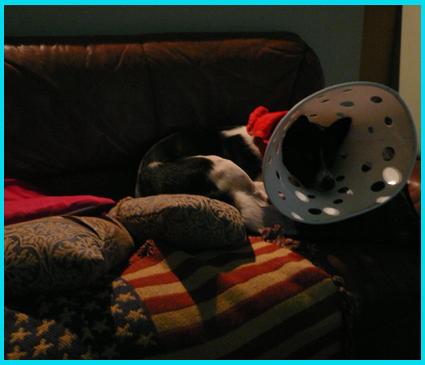 太一の、憂鬱な日常。ピカソ帽子の生活。_e0236072_8582067.jpg