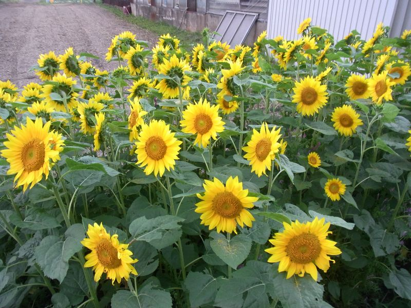 暑い夏の一日を終えて_c0025115_19312355.jpg