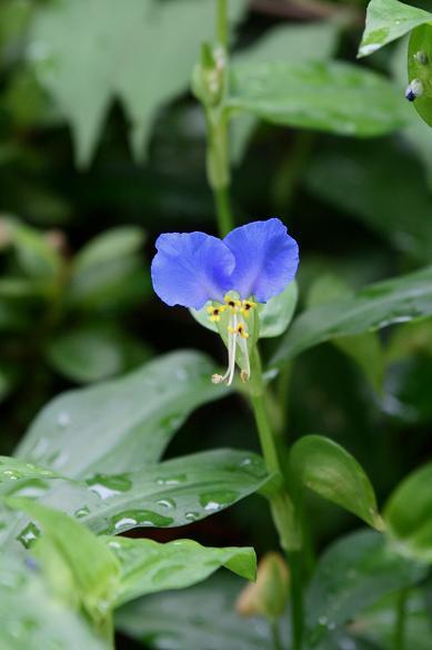 庭の花_d0150720_17211457.jpg