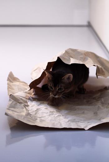 [猫的]乗る潜る_e0090124_6495552.jpg