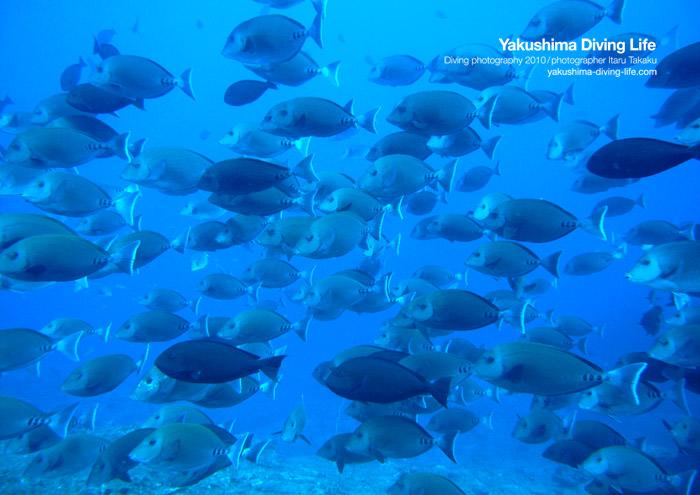 魚舞う海!_b0186442_23252029.jpg