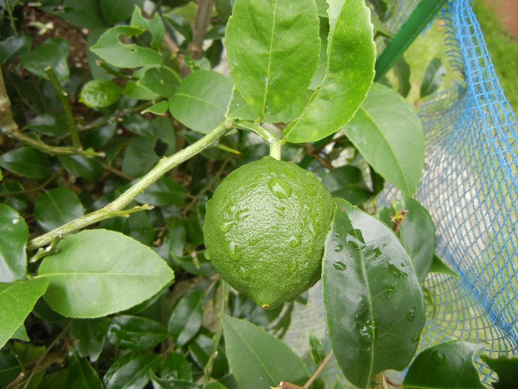 2011年7月29日(金)梅雨みたいだけど涼しいので快適です!_f0060461_10444516.jpg