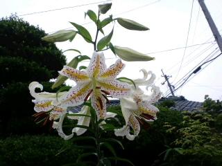 花をつけると言う事_d0027486_1031050.jpg