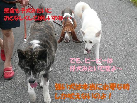 f0121712_22221169.jpg