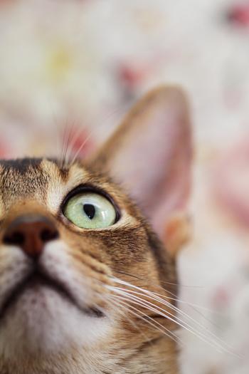 [猫的]猫ふん次点作_e0090124_734442.jpg