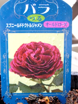 薔薇が我が家にやってきた!_b0197225_17361651.jpg