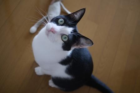 猫のお友だち ビンゴくん編。_a0143140_2236852.jpg