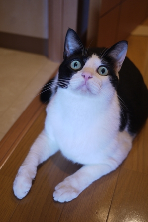 猫のお友だち ビンゴくん編。_a0143140_2239098.jpg