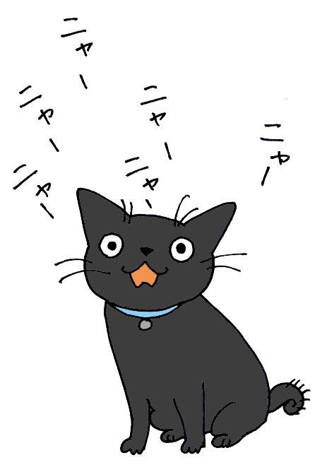 子猫の里親募集中 くまちゃん_a0064067_14153466.jpg