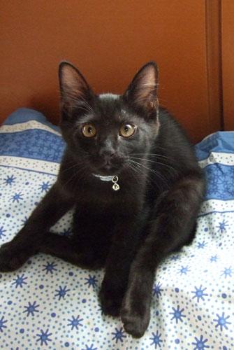 子猫の里親募集中 くまちゃん_a0064067_14173361.jpg