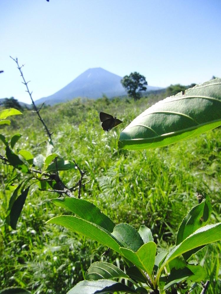 ミヤマカラスシジミ  富士山が似合います。  2011.7.23山梨県_a0146869_0425848.jpg