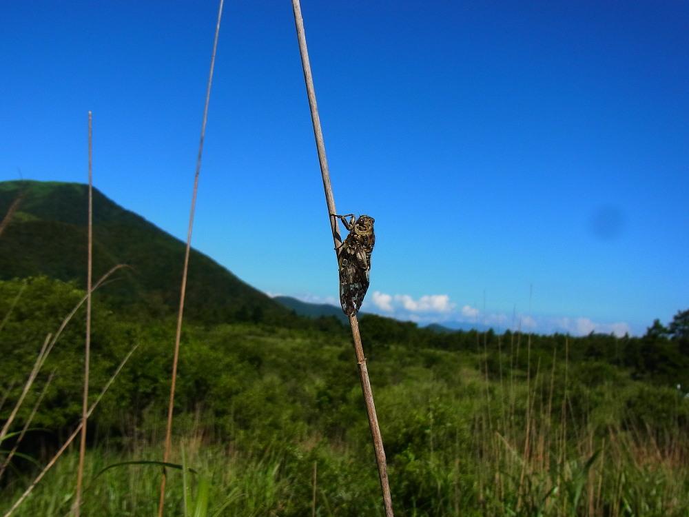 ミヤマカラスシジミ  富士山が似合います。  2011.7.23山梨県_a0146869_0434121.jpg
