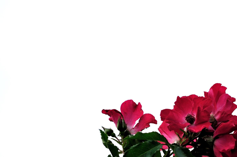 b0204383_1524431.jpg