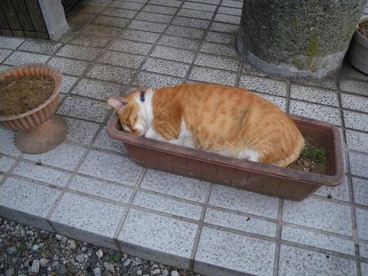 鎌倉☆ピース_d0178891_1574759.jpg