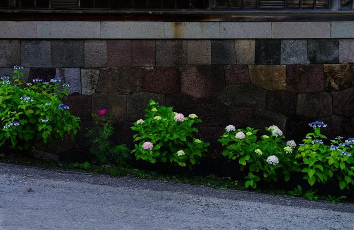 函館あじさい    正しい週末の過ごし方 その6_b0103798_5275976.jpg