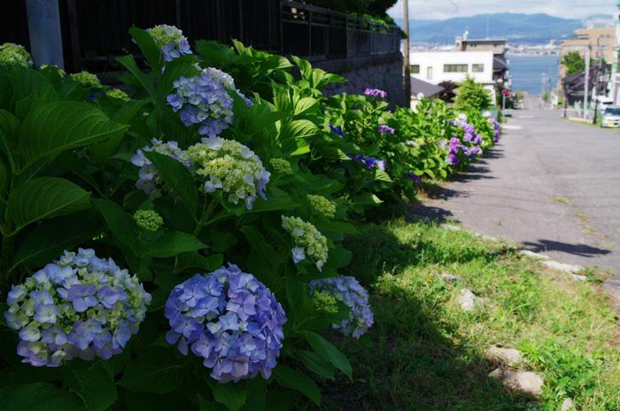 函館あじさい    正しい週末の過ごし方 その6_b0103798_5292991.jpg