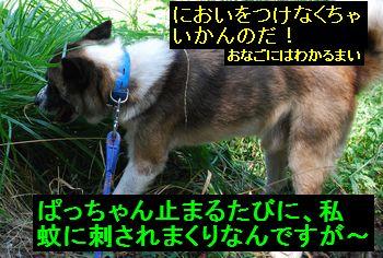 f0109202_15193427.jpg