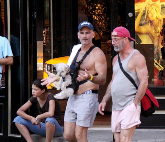 ニューヨークの街角で見かけた斬新な仔犬のお散歩の様子_b0007805_10381968.jpg