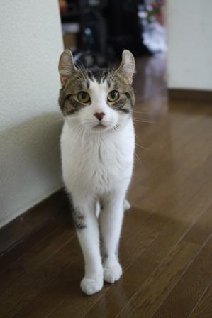猫のお友だち ほっぺくん編。_a0143140_22233836.jpg