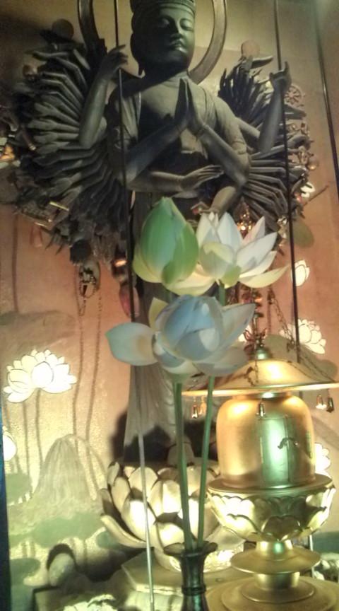 蓮華の美しさ_c0100949_22534557.jpg