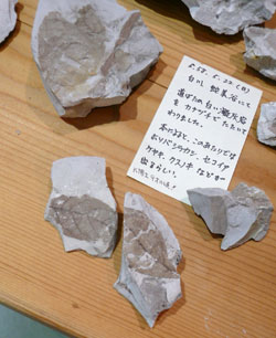 これぞ、K氏の発掘『記憶』いやDNAかも。_a0017350_9505287.jpg
