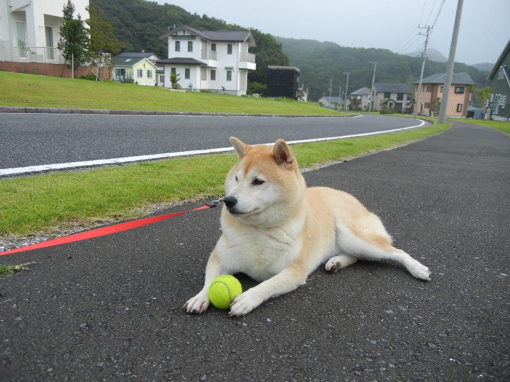 2011年7月31日(日)愛ちゃんと心ちゃんだらけ!_f0060461_13331289.jpg
