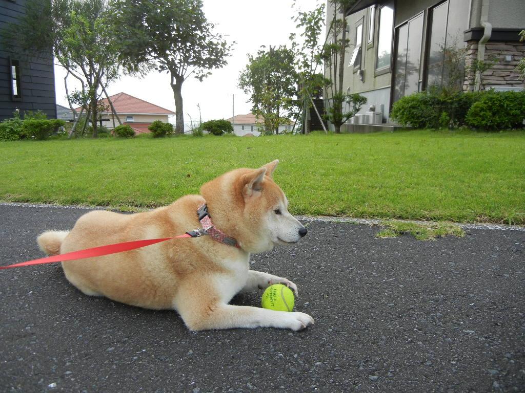 2011年7月31日(日)愛ちゃんと心ちゃんだらけ!_f0060461_13345548.jpg