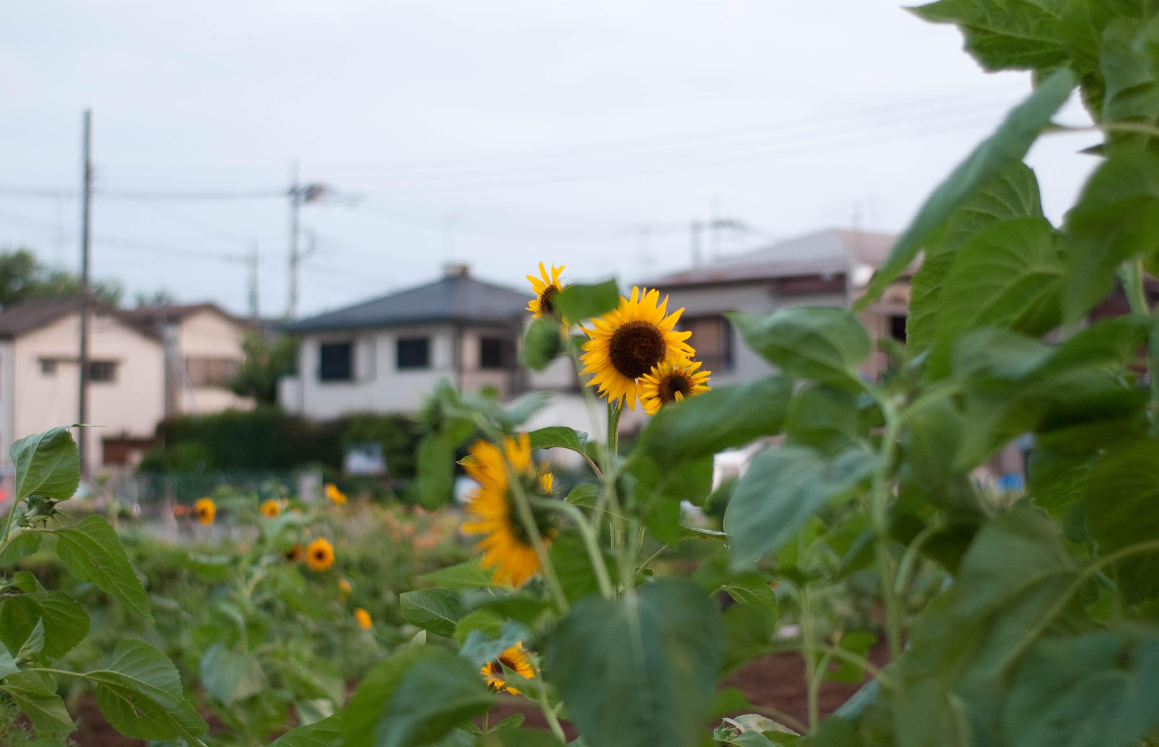 ぼくの住む町_b0194880_12143256.jpg