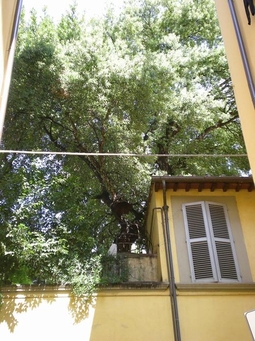 フィレンツェを歩く。。。_c0179785_18565011.jpg