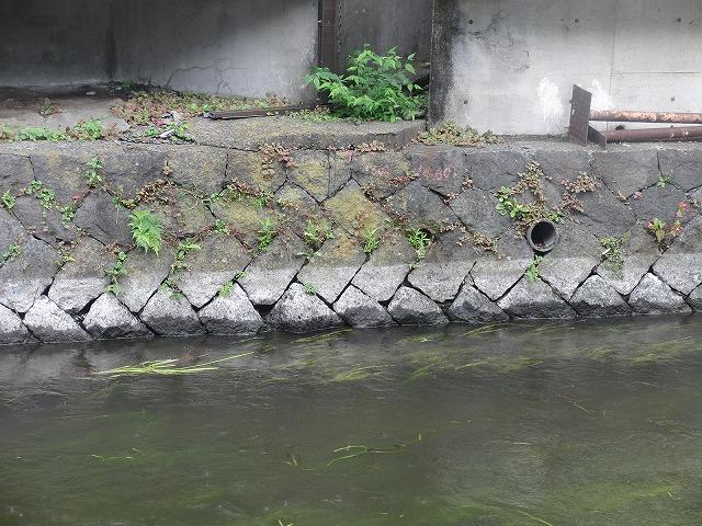 平成23年度水資源功績者表彰受賞・・・第25回田宿川たらい流し川祭り_f0141310_7514342.jpg