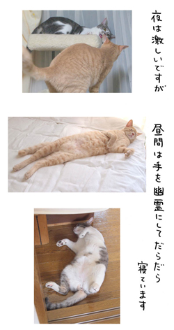 「biwamap」の坂木浩子さん登場!_c0039735_1523113.jpg