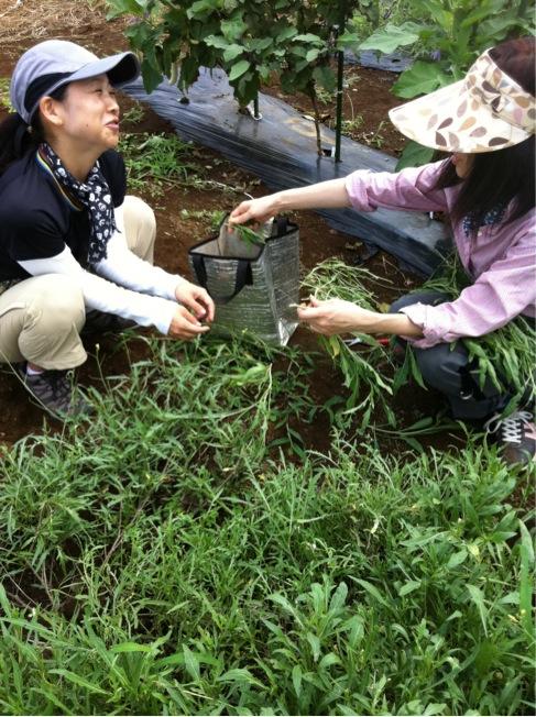 野生のルーコラの収穫を手伝って頂きありがとうございます_c0222448_1228716.jpg