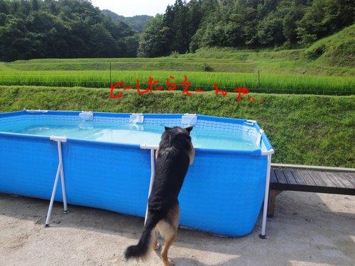 b0113663_10595972.jpg