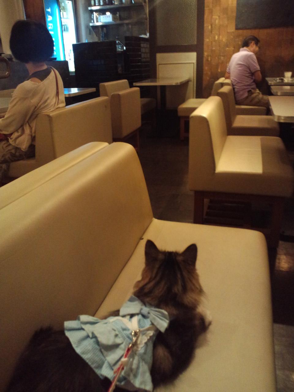TARLUM 富ヶ谷 ☆ドッグカフェ_c0151965_196167.jpg