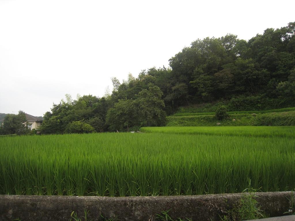甲山・鷲林寺(ジュウリンジ)_f0205367_20112189.jpg