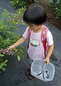 Fresh Blue berries!_b0195783_1035631.jpg