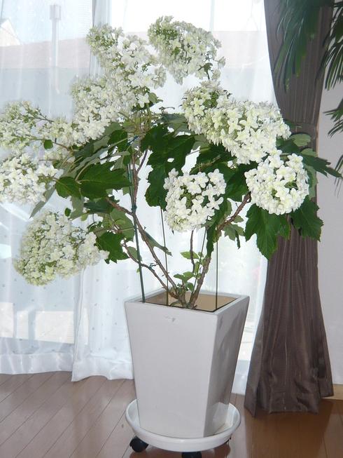 素敵な植物との出会い_e0190287_1637626.jpg