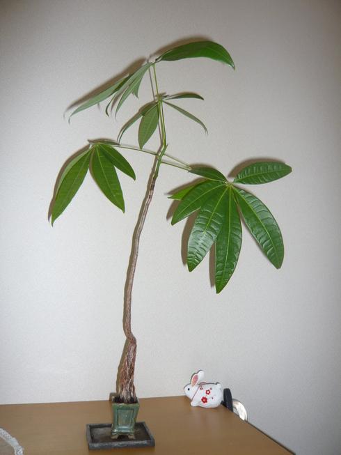 素敵な植物との出会い_e0190287_16411829.jpg