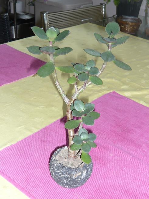 素敵な植物との出会い_e0190287_16423618.jpg