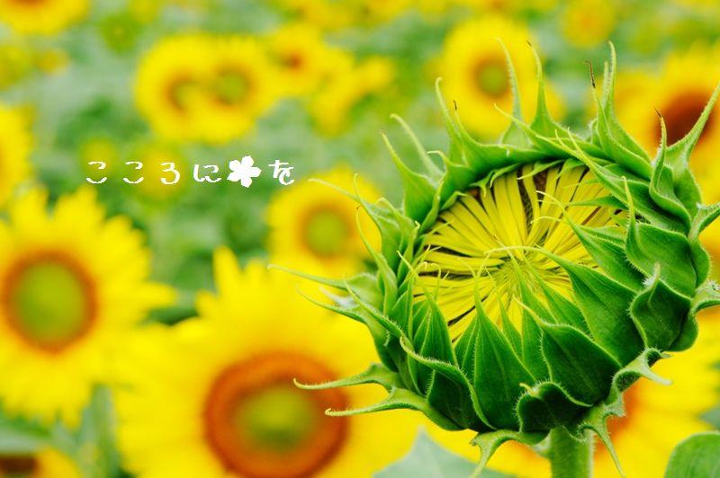 f0180993_21474732.jpg