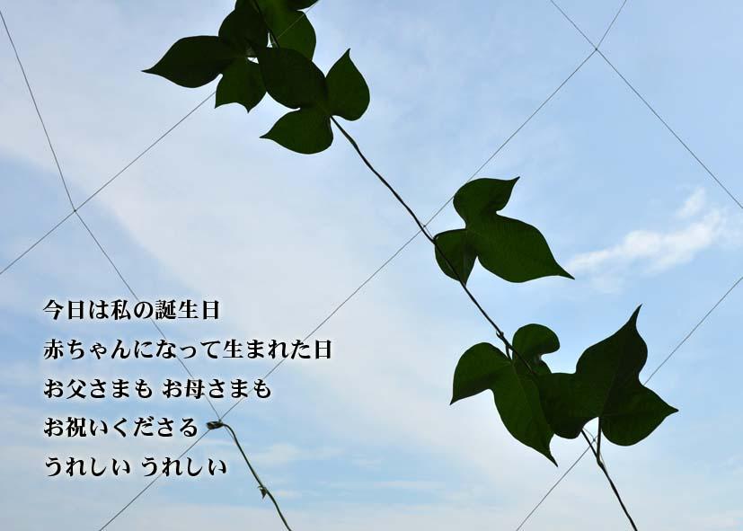 7月31日_a0102098_16241036.jpg