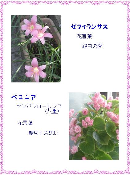 b0229904_2146425.jpg
